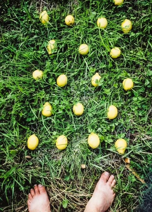 05 | Zitronen im Gras