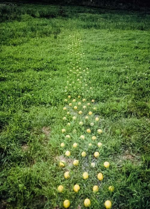 06 | Zitronen im Gras
